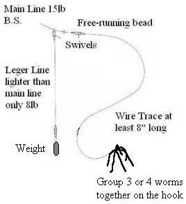 Eel leger rig with worms
